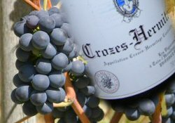 Crozes Hermitage wine and food pairing tips