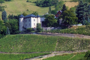 Roussette de Savoie wine and food pairing tips