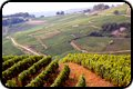 French wine region pictures, France vineyards photos